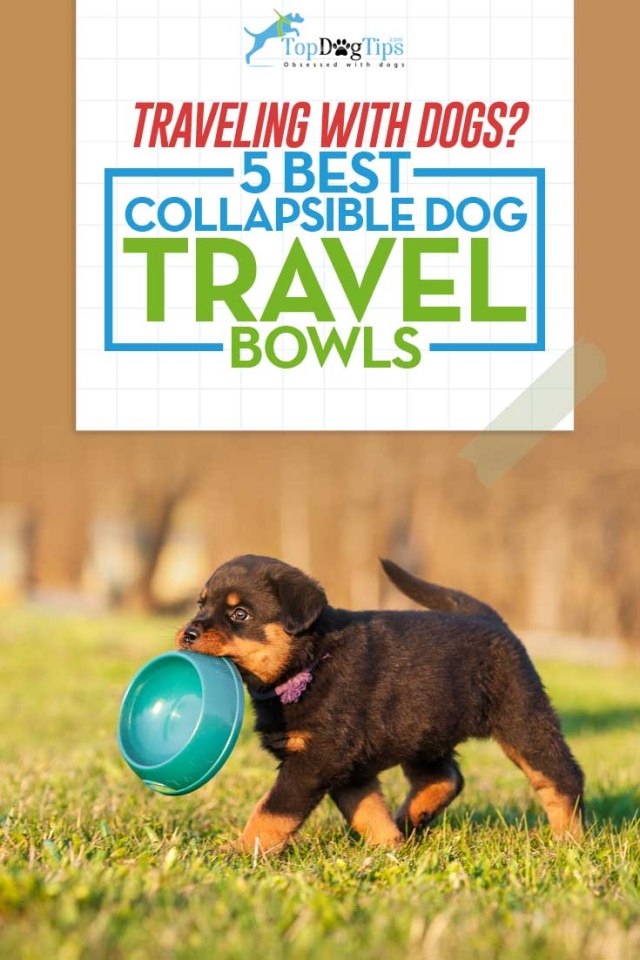 Top Rated Best Collapsible Dog Bowls