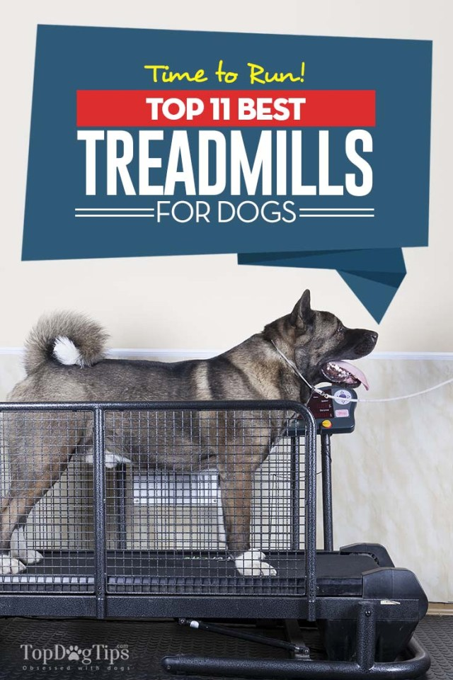 Top Rated Best Dog Treadmill Choices for Exercise and Recovery