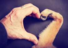 Why Science Says Dogs Make Us Happier and Healthier