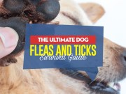 Your Dog Fleas and Ticks Survival Guide