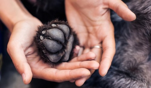 7 Ways to Care for Dog Paws