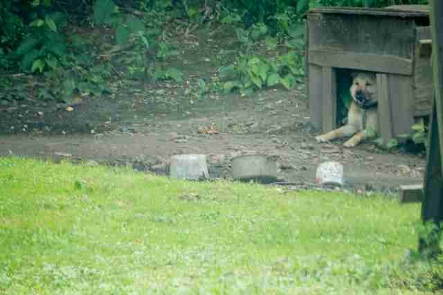WATCH: Dog Chained For First 3 Years of Life Runs for the First Time