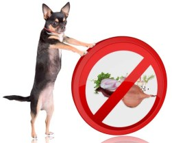 Are onions bad for dogs