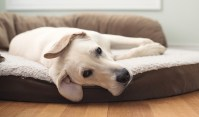 Top 7 Best Orthopedic Dog Bed Models in 2017 (for all ...