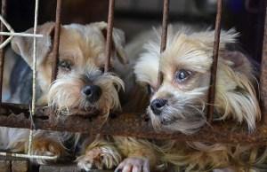 California Set to Ban Puppy Mill Sales to Encourage Dog Adoption
