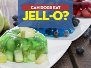 Can Dogs Have JellO