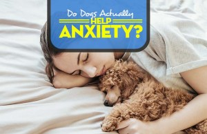 How Do Dogs Help Anxiety