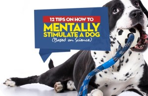How to Mentally Stimulate a Dog
