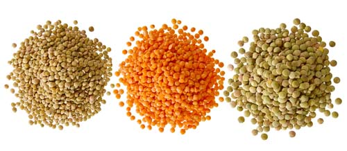 Lentils and dogs