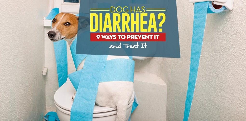My Dog Has Diarrhea