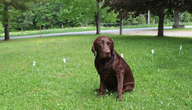 PetSafe YardMax In Ground Dog Fence