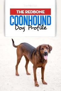 Redbone Coonhound Dog Profile