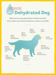 Signs of dog dehydration