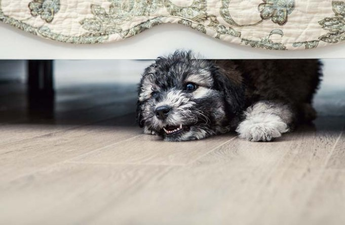 Study - Dogs Fear and Aggression Can Be Genetic