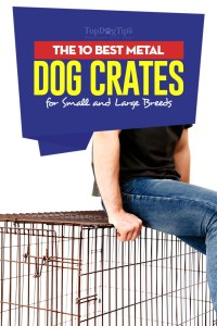 The 10 Best Metal Dog Crates for Small and Large Breeds