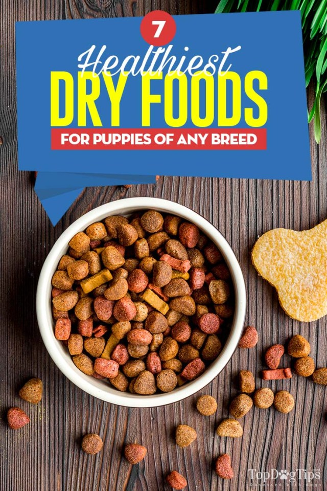 The 7 Best Dry Foods for Puppies of Any Breed