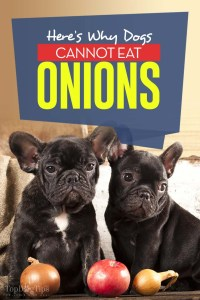 The Real Reason Dogs Cannot Eat Onions