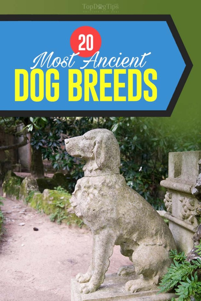 Top 20 Most Ancient Dog Breeds
