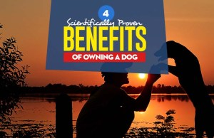 Top Benefits of Owning a Dog