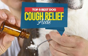Top Best Dog Cough Relief Aids