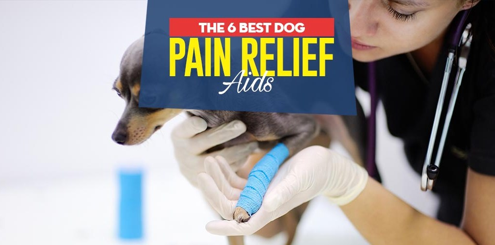 Top Best Dog Pain Relief Aids
