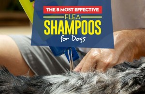 Top Best Flea Shampoos for Dogs