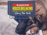 Top Hacks on How to Housebreak a Puppy Using Puppy Pee Pads