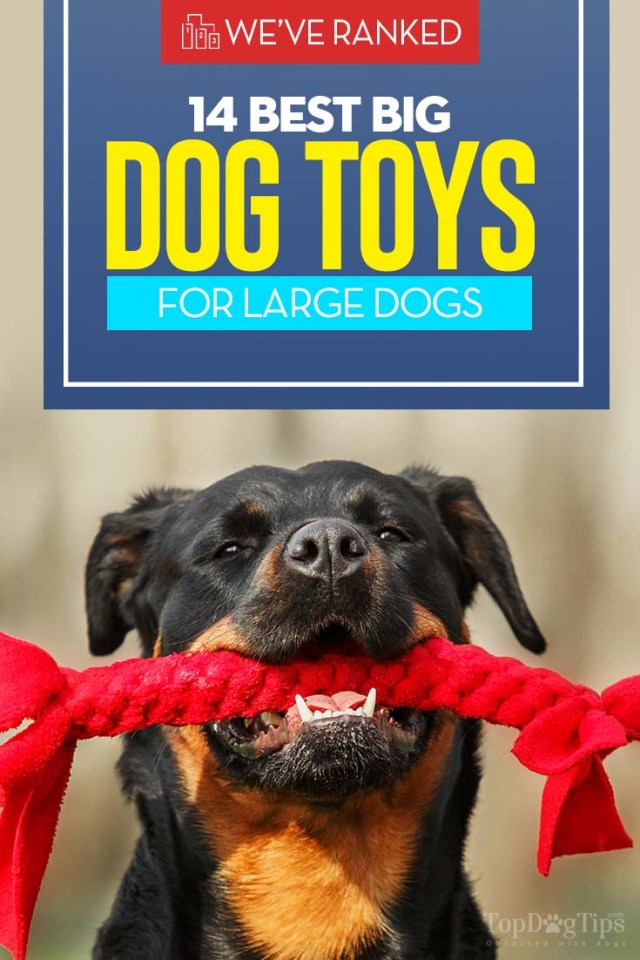 Top Rated Big Dog Toys for Large Breeds 2020