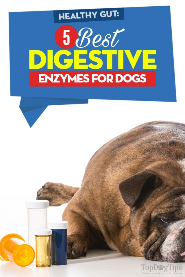 Top Rated Digestive Enzymes for Dogs 2020