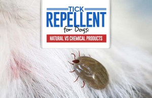 Top Tick Repellent for Dogs