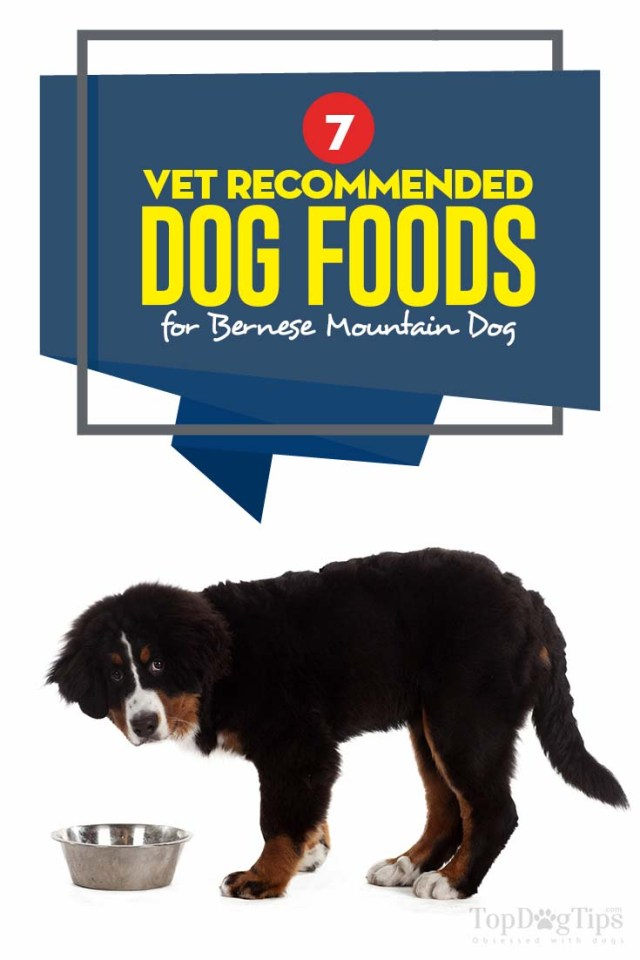 Vet Recommended Best Dog Food for Bernese Mountain Dog