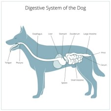 When to Supplement with Dog Digestive Enzymes