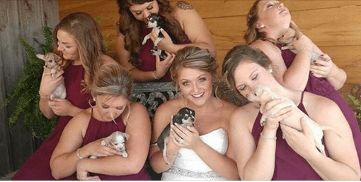 Bride Uses Puppy Bouquets to Raise Adoption Awareness