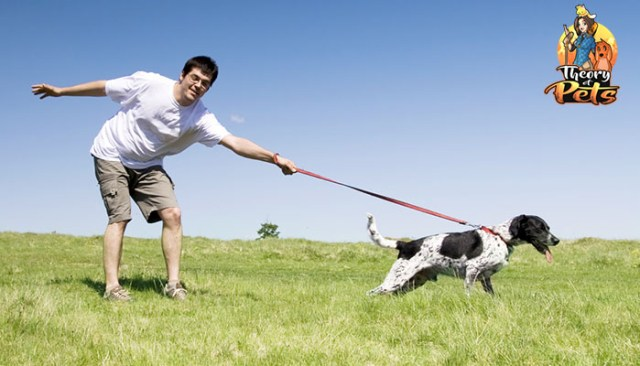Are Online Dog Training Courses Worth the Cost