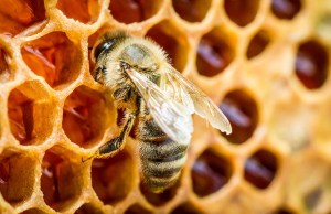 Best Bee Products That Can Improve Your Dogs Health