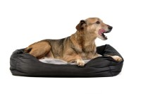 Top 7 Best Dog Bed Warmer Solutions for Winter in 2017