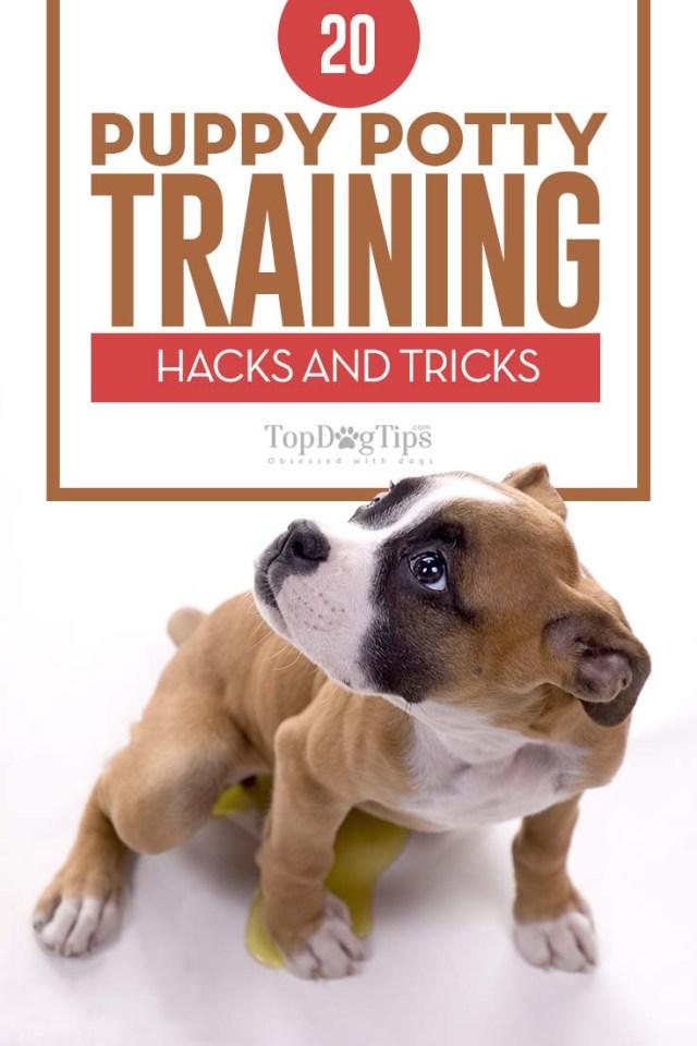 Best Puppy Potty Training Hacks