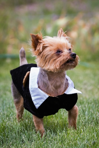 Top 8 Best Thanksgiving Dog Costumes for 2018's Holiday Season