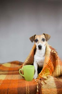 Clear Signs That Your Dog May Be Cold