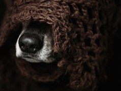 Do Dogs Need Blankets In Winter