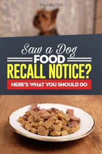 Dog Food Recall Alert? Here's What You Do