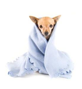 Dog blankets for winter