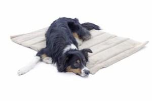 Dog lying on a pet blanket