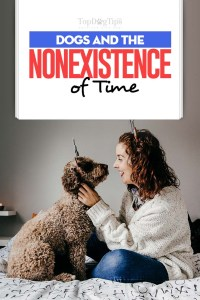 Dogs and the Nonexistence of Time