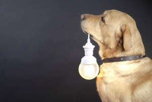 How to Keep Your Dog Awake