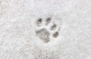 How to Protect Your Dogs Paws in Winter