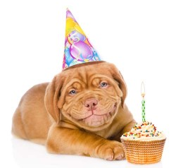 Is cake bad for dogs