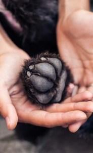 Moisturize Your Dog's Paws