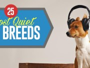 Most Quiet Dogs