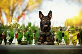 Thanksgiving Dog Show